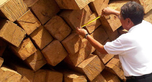 timber producers and exporters | filtra timber trading