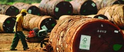 first fsc certified in philippines | filtra timber trading