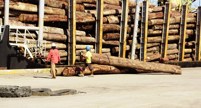 Plantation Species Timber Export From The Philippines