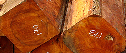 plantation species for export | timber producers and exporters