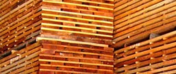 plantation species, timber export from the philippines